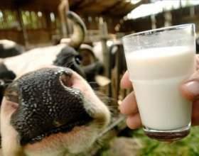 Как стерилизовать молоко фото