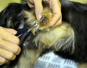Как стричь когти собакам фото