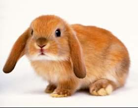 Как стричь когти кролику фото