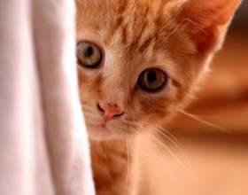 Как успокоить котёнка фото