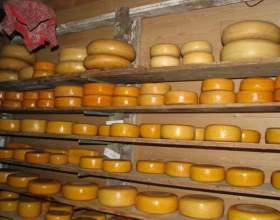 Как сушить сыр фото
