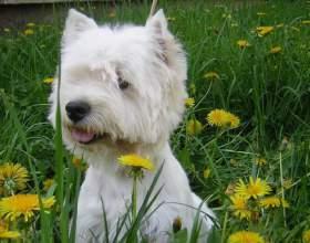 Как следует обучать собаку писать фото