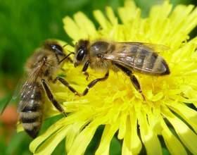 Как уберечь себя от пчел фото
