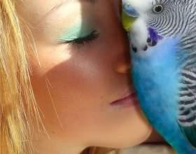 Как учить говорить попугаев фото