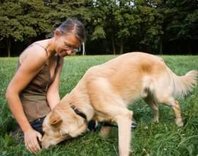 Как обучить собаку командам фото