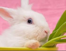 Как ухаживать за домашними кроликами фото