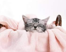 Как ухаживать за кошкой после стерилизации фото