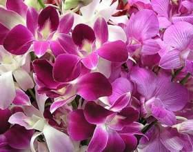Как ухаживать за орхидеями зимой фото