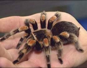 Как ухаживать за пауками фото