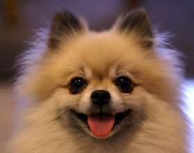 Как ухаживать за пушистой собакой фото