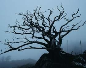 Как украшать деревья фото