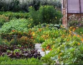 Как украсить огород по-французски фото