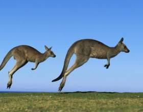 Как улететь в австралию фото