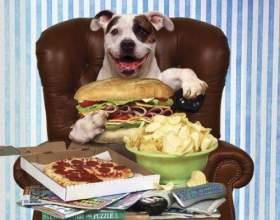 Как улучшить аппетит собаки фото