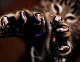 Как успокоить кошку фото