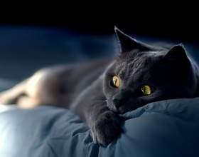 Что делать, если заболела кошка фото