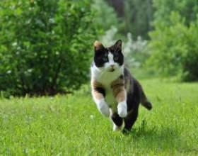 Как ходит кошка фото
