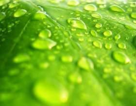 Как увеличить влажность воздуха фото