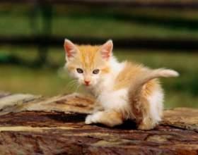 Как узнать, что у кота глисты фото