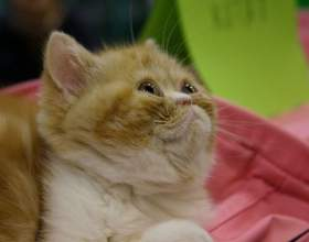 Как определить, что у котенка глисты фото