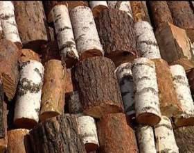 Как узнать, какие у меня дрова фото