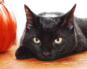 Как узнать породу котов фото