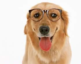 Как узнать породу своей собаки фото