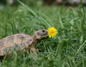 Как узнать возраст сухопутной черепахи фото
