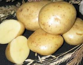 Как в квартире хранить картошку фото