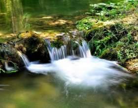 Как в лесу найти воду фото