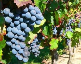 Как варить компот из винограда фото