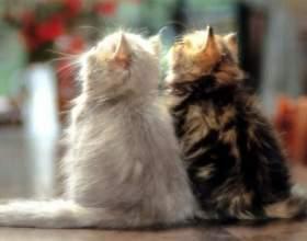 Как вязать котов фото