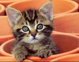 Как воспитать кошек фото