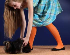 Как тренировать щенка фото