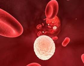 Как восстановить лейкоциты фото