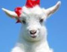Как встречать 2015 год - год деревянной козы фото