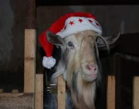 Как встречать год синей деревянной козы фото