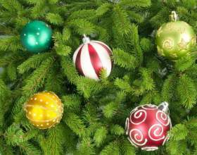 Как выбирать елки на новый год фото