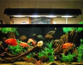 Как выбрать аквариум фото