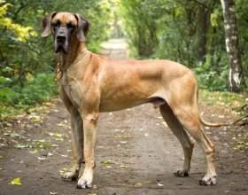 Как выбрать большую собаку фото
