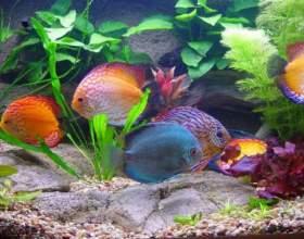 Как выбрать грунт для аквариума фото