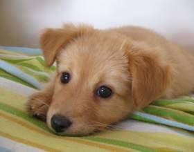 Как выбрать имя щенку фото