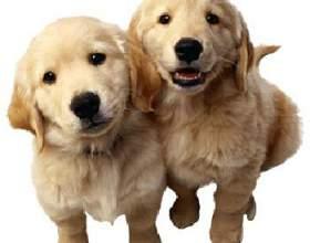 Как выбрат кличку для собаки фото