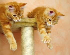 Как выбрать когтеточку для кошки фото
