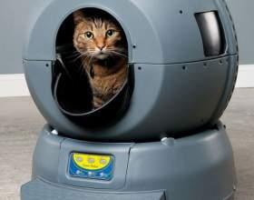 Как выбрать кошачий туалет фото
