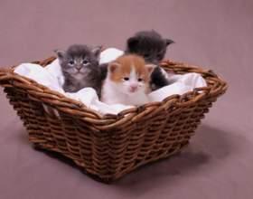 Как выбрать породу котенка фото