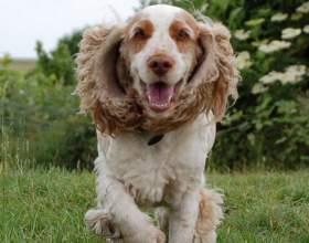 Как выбрать красивую и умную собаку средних пород фото