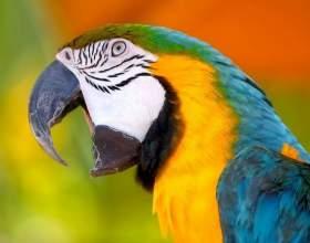 Как выбрать попугайчика фото