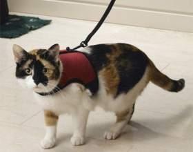 Как выбрать поводок для кошки фото