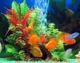 Мой первый аквариум: кого завести фото
